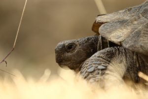tortoise-1687664_960_720